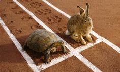 Slow and steady wins the race! Follow the link for tips on how to prepare for your job interview...