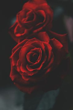 I love Red Roses. It's like my love for sunflowers. Flowers Nature, Love Flowers, My Flower, Flower Art, Flower Wallpaper, Iphone Wallpaper, Wall Wallpaper, Gif Kunst, Rose Pictures