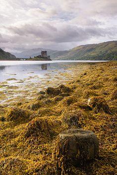 Eilean Donan seaweed - Dornie, Scotland, United Kingdom by Bart Heirweg