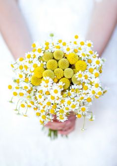 Craspedia and feverfew, the latter comes in pale yellow and might be a subtle way to add yellow ---  ©Tiara Photographie - www.lamarieeauxpiedsnus.com