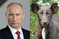 Vladimir Putin Look Alike   Click the link to view full image and description : )