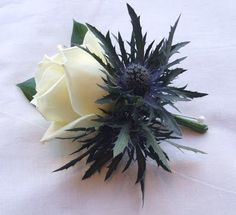 Blue Wedding Flowers I think the classiest boquet look would be to do basically a small white rose bouquet and then build around it a circle or two of thistles. Then wrap it in tartan and put the brooch center on the stems. Thistle Wedding, Ivory Wedding Flowers, Flower Bouquet Wedding, Floral Wedding, Trendy Wedding, Wedding Ideas, Tartan Wedding, Purple Wedding, Bouquet Bleu