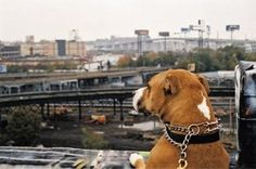 dog in the big city