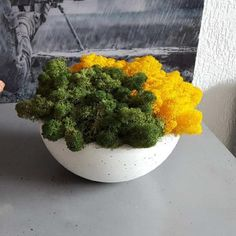 Misa betonowa z chrobotkiem wys. Herbs, Food, Meal, Eten, Herb, Meals, Spice