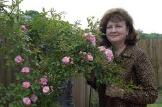 Rose survives Katrina's devastation, blooms. Tenacious flower named for Peggy Martin.