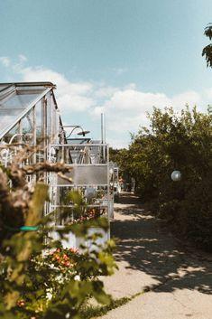 Sommerhochzeit in der Alten Gärtnerei Alter, Fine Art Photography, Studios, Flora, Summer, Plants, Artistic Photography, Art Photography