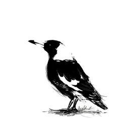 repost of Little Bird - Little Bird Black White Art, Black And White Drawing, Bird Drawings, Tattoo Drawings, Pencil Drawings, Australian Birds, Australian Tattoo, Body Art Tattoos, Tatoos