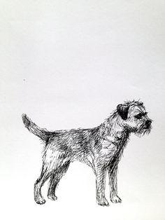 Border Terrier dog sketch ink on paper by Karen of tintabernacle