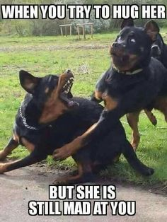 b2b91eb3fc83142879df3491878feabd friday funnies dog funnies 37 really funny memes humor that will make you laugh memes humor,Really Funny Memes