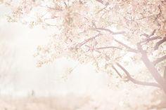 A beautiful place. & it looks pink and light - I love stuff like that. (: