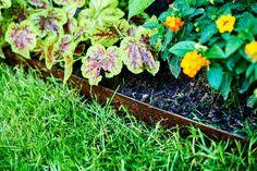 Garten Idee: Ein Blumenbeet mit Metallkante. Herbs, Plants, Lawn, Floral, Herb, Plant, Spice, Planting, Planets