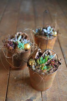 サビ缶多肉植物寄せ植えシリーズの画像:多肉植物寄せ植え販売 アトリエ華もみじ