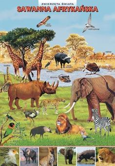 Elementary Bulletin Boards, Preschool Science, Tropical Art, Animal Projects, Science And Nature, Montessori, Homeschool, Elephant, Teaching