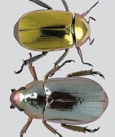 Beetles | Archivist Gallery