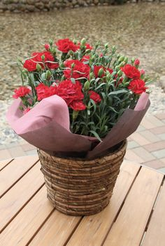 カーネーション'グランルージュ' Carnation 'Grand Rouge' Nature, Plants, Wedding, Valentines Day Weddings, Naturaleza, Plant, Weddings, Nature Illustration, Off Grid