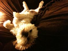 looks like teddy!