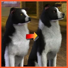 Border Collie Improved by LittleV - The Exchange - Community - The Sims 3 Sims 3 Mods, Sims Cc, The Sims 3 Pets, Dog Drawings, Sims Building, Sims Games, Maxis, Stables, Border Collie
