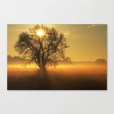 Autumn Dream Stretched Canvas by Tanja Riedel - $85.00