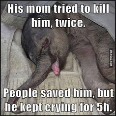 This is a crying baby elephant. It's so sad. Try Not To Cry, Cheap Mens Fashion, Vintage Inspired Outfits, Eco Friendly Fashion, Pink Handbags, Faith In Humanity, Animals Beautiful, Beautiful Creatures, My Heart Is Breaking