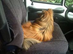 Floyd leert met de mobilhome rijden, waar gaan we heen?