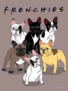 The major breeds of bulldogs are English bulldog, American bulldog, and French bulldog. The bulldog has a broad shoulder which matches with the head. French Bulldog Wallpaper, French Bulldog Blue, French Bulldog Puppies, Pug Puppies, Terrier Puppies, Bull Terriers, Frenchie Puppies, Havanese Dogs, Teacup French Bulldogs