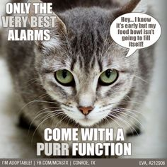 Much better than those annoying beep sounds! #cats #funny