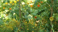 Mariage fleurs legumes potager