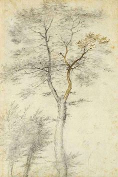Three Studies of Trees, Fra Bartolommeo (Baccio della Porta) (Italian, 1472 - Black chalk, point of brush and brown ink, 1508 (Getty Museum) Pencil Drawings Of Nature, Art Drawings, Miguel Angel, Artist Painting, Painting & Drawing, Drawing Trees, Tree Study, Geometric Drawing, Getty Museum
