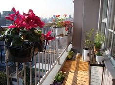 How to Choose Plants for a Balcony Garden