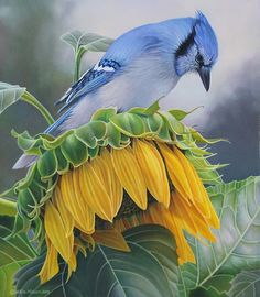 This Blue Jay is experiencing the contrast of life. Life hands you an all you can eat buffet of sunflower seed and then asks you to fly upside down to eat it. He will figure it out though. He is a Blue Jay after all. Blue Jay Bird, Yellow Sunflower, Sunflower Seeds, Sunflower Canvas, Wall Art Crafts, Acrylic Paint Set, Sunflower Tattoos, Bird Pictures, Animal Paintings