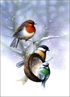 Oiseaux en peinture - David Finney