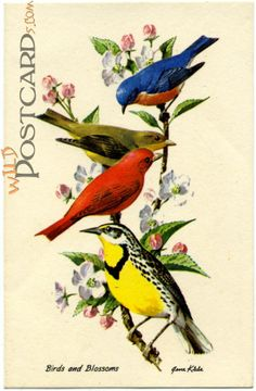 Vintage Animal Illustrations | by Chris Overstreet in Animals , Divided Back Era Postcards