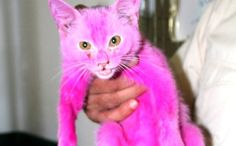 Powerful Pink Cat to Save Thousands More