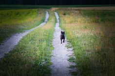 Dog running down road.   #dogs