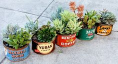 succulents in old coffee cans