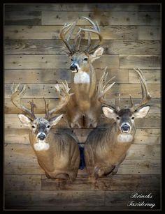 Hunting Rooms, Deer Hunting Decor, Deer Head Decor, Hunting Decal, Whitetail Deer Hunting, Deer Mount Decor, Deer Shoulder Mount, Tree Stand Hunting, Deer Skull Art