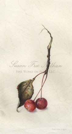 Contemporary Botanical Art - Susan Frei Nathan Fine Works on Paper -  DENISE WALSER-KOLAR Crabapples x 5, 2013 Watercolor on vellum 9 x 4 1/2 inches