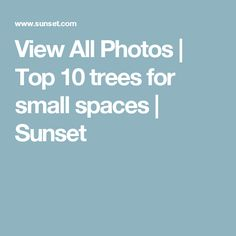 View All Photos | Top 10 trees for small spaces | Sunset