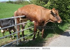 I hate it when I'm stuck on the fence. Photographer, George Green