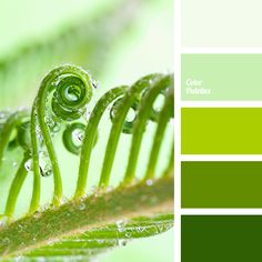 color of greens, dark green, foliage color, green monochrome color palette, light green, monochrome palette, pale green, rich green, shades of green, young greens color.