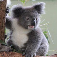 #Australia la terra dalle 1000 avventure:http://www.australia.com/it-it/places/great-barrier-reef.html