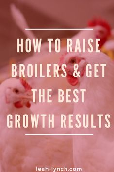 To Raise Broilers How to raise broilers on your urban farm or homestead and get the best growth results.How to raise broilers on your urban farm or homestead and get the best growth results. Raising Meat Chickens, Broiler Chicken, Easy Hobbies, Farm Business, Chicken Tractors, Beef Cattle, Animal Nutrition, Building A Chicken Coop, Chicken Breeds