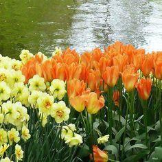 beauty of flower