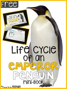 All About Penguins: Non-fiction and science penguin activities for the primary classroom are shared, along with a free Emperor penguin life cycle mini-book. Penguin Day, Penguin Life, Science Penguin, Preschool Science, Teaching Science, Teaching Ideas, Teaching Resources, All About Penguins, March Of The Penguins