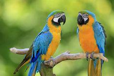 Uccelli-Quiz about birds in Italian language  https://www.easylearnitalian.com/2013/04/uccelli-quiz-about-birds-in-italian.html