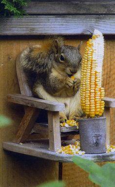 Squirrel feeder by CarlsonWood on Etsy,.......sooooo cute!