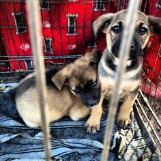 Help save an animal from a shelter