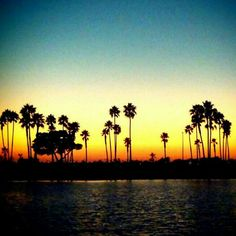 Palm trees of California