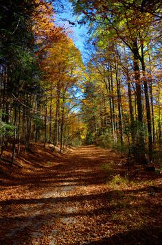 Autumn ~ Bavarian Forest ~ Germany