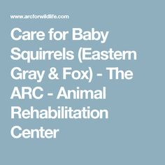 Care for Baby Squirrels (Eastern Gray & Fox) - The ARC - Animal Rehabilitation Center